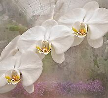 Spring White by Marilyn Cornwell
