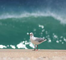 Seagull Wave by nickgreenphoto
