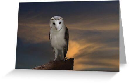 Early Evening Hunting by byronbackyard