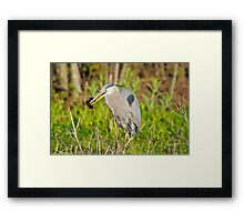 Who Caught Who Framed Print
