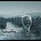 Bear by Anne Staub