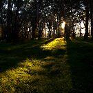 Light Rays by John Vandeven