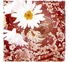 Daisy and Lichen Hand In Hand Photographic Print