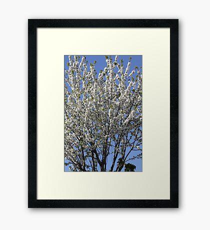 SUMMEY TREE Framed Print