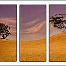 The Dry Land by NolsNZ