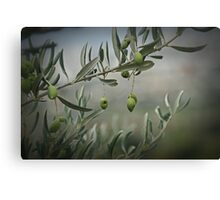 Tuscan Olives Canvas Print
