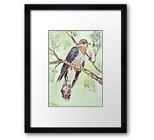 Red-chested Cuckoo (Piet-My-Vrou) Framed Print