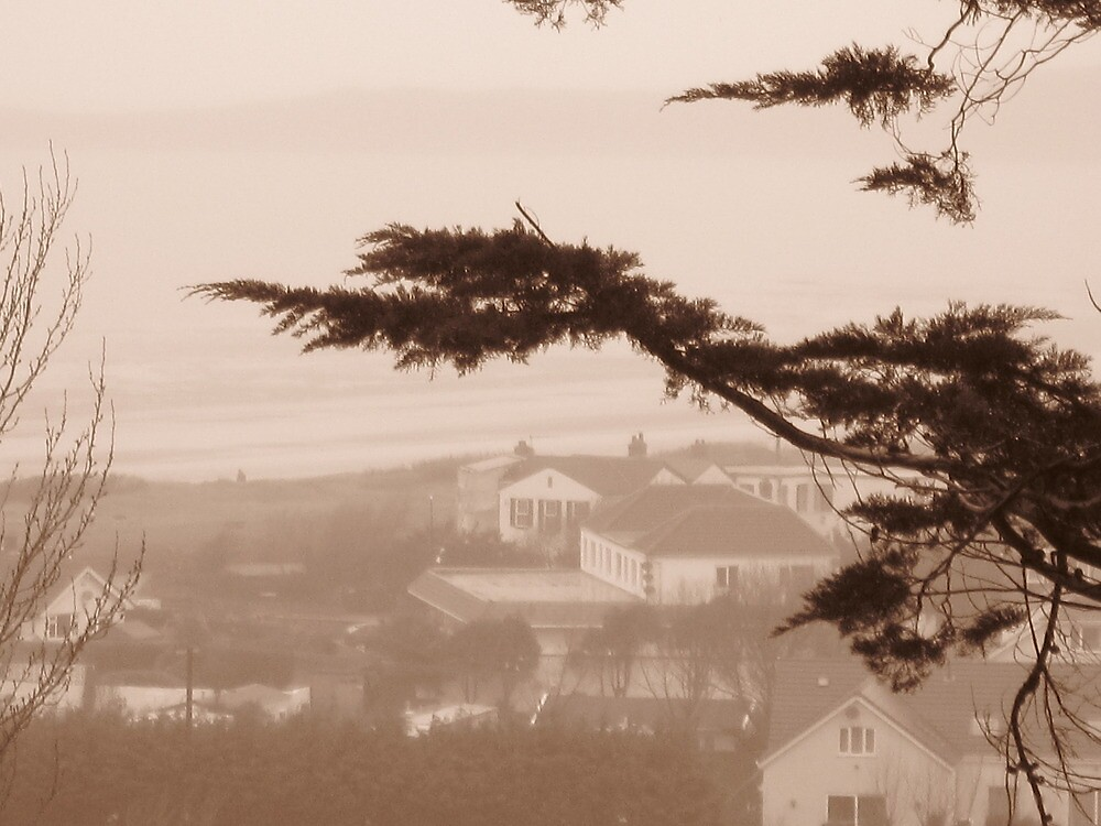 Romantic windswept tree overlooks the bluff, in B/W. by jams