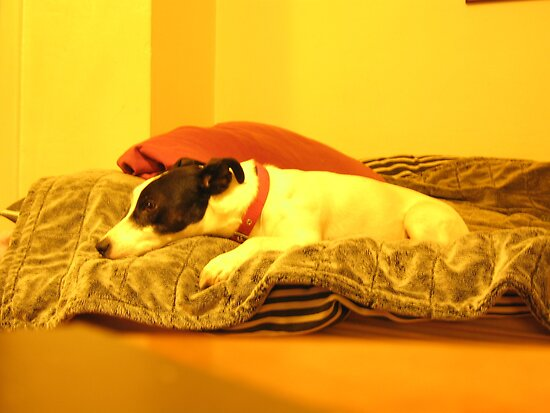 My best pal resting peacefully. by jams
