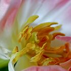 The Beauty Within by Chrissie Taylor