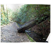 Dead Log Poster