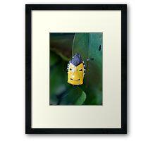 Elvis Reincarnated as a Bug?  Framed Print