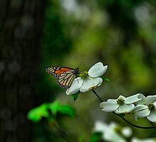 Dog and Butterfly by Brenda Burnett
