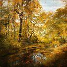 Old Stream by John Rivera