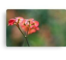 Red flowers against green Canvas Print
