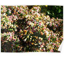 Multi-coloured bush bash Poster