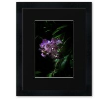 Purple Moon Framed Print