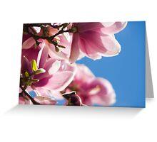 Spring Magnolia Greeting Card