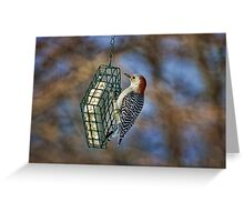 Northern Woodpecker Greeting Card