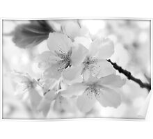 Backyard blossom Poster