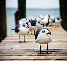 Gulls on the Bay by WilliamJPhoto