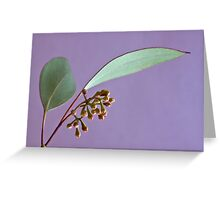 Eucalyptus Leaves And Buds - Macro  Greeting Card