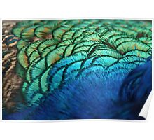 Shimmer glimmer peacock feathers Poster