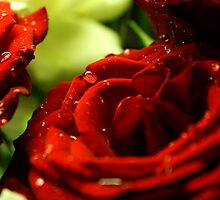Roses by simassey81