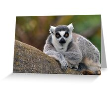 Me? From Madagascar.  Where You From? Greeting Card