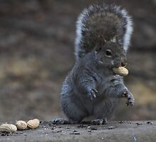 The Peanut Snatcher by Sharon Batdorf