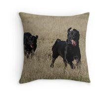 We Have BALL!!! Throw Pillow