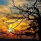 Winter Sunset by Daniel Ray Thibodeaux