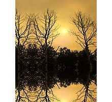 Mirrored Tree Reflections Photographic Print