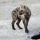 Spotted Hyena Cub, Kenya.  by Carole-Anne