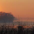 Orange sunset by Aleksandra Misic