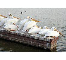 Pelican Family Photographic Print