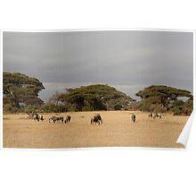 Wildebeest, White Race, Kenya  Poster