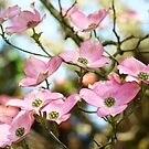 Trees Pink Dogwood Tree Flowers art Baslee Troutman by BasleeArtPrints
