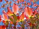 Bright Colorful Floral art Pink Dogwood Flowers Baslee Troutman by BasleeArtPrints