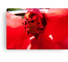 Red Rush Canvas Print