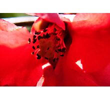 Red Rush Photographic Print