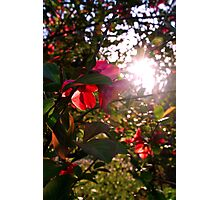 Coral Sunset Photographic Print