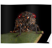 Cicada this! Poster