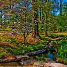 Springtime, Hodges Gardens State Park (HDR) by Briar Richard