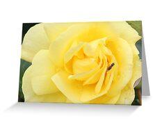 Te Anau Rose Greeting Card