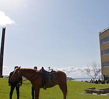 Police Horse - Seattle, Washington by Allie Ludvigson