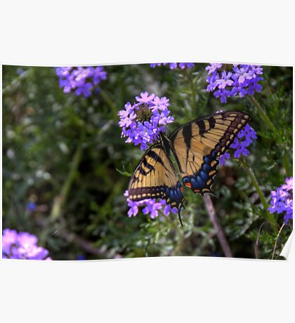 A Butterfly Enjoys Spring Flowers Poster