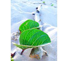 free breeze Photographic Print