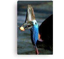 Take a bite - Etty Bay Cassowary Canvas Print