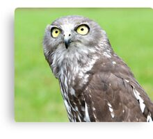 Looking Up - barking owl Canvas Print
